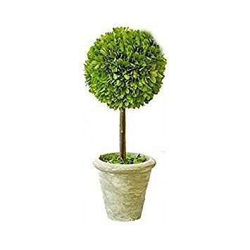 Preserved Boxwood Singel Ball Topiary 12'' by Tradingsmith by Tradingsmith
