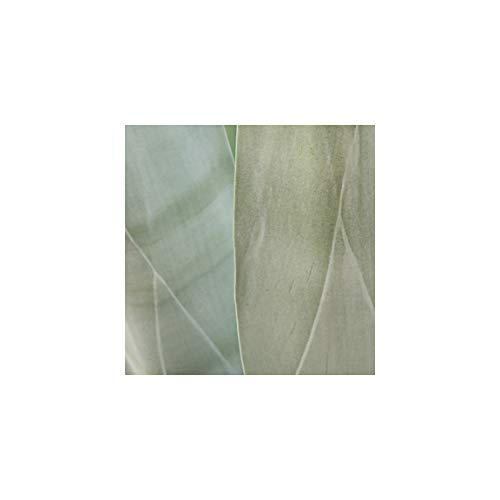 A O Tucker Artwork Contemporary - 8 x 8 inch - Agave - Fine Art Photograph - Smooth Panel - Ready to Hang Home & Office Decor