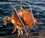 Crab trap net with bait holder fish with for Fishing pole crab trap