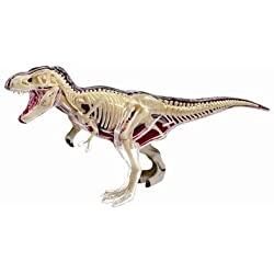 Learn about the T-Rex Dinosaur Anatomy - 11 inch 4-D See-thru Model (Age 8+) by TEDCO