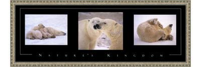 Poster Palooza Framed Nature's Kingdom-Polar Bears- 36x12 Inches - Art Print (Ornate Silver Frame)