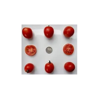 Northern Delight - Organic Heirloom Tomato Seeds - Very, Very Early - 40 Seeds : Garden & Outdoor