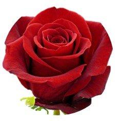 3 opinioni per Rosa Rosso 24Topper per torta 4cm su carta di riso