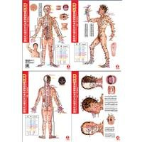 Meridians Acupuncture Chart (Portable latest international standards for acupuncture acupuncture meridian charts (men live version) (waterproof tear is not bad value edition) [paperback](Chinese Edition))