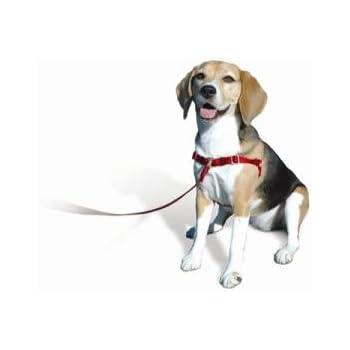 Sense Ible No Pull Dog Harness Blue Medium Large Wide