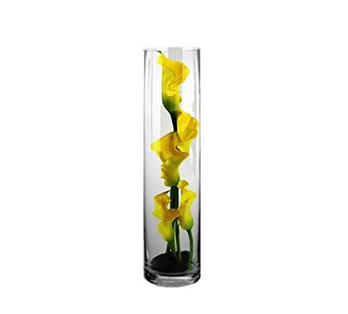 CYS EXCEL Glass Vase, Cylinder Vase, Glass Cylinder Vase, (Pack of 1) (H:16