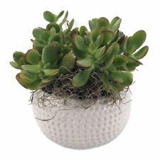 Golf Ceramic Sports Planter with Live Succulent Plant - 4.25