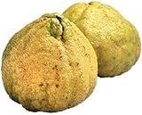 Fresh Uniq or Ugli Fruit (Set of 3)