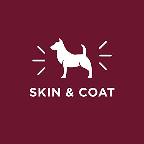 Purina Dog Chow Dry Dog Food, Tender & Crunchy With Real Lamb - 40 lb. Bag