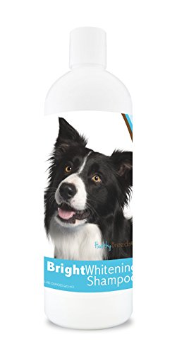 (Healthy Breeds Dog Whitener Shampoo For Border Collie - For White, Lighter Fur - Over 150 Breeds - 12 Oz - With Oatmeal For Dry, Itchy, Sensitive, Skin - Moisturizes, Nourishes Coat)