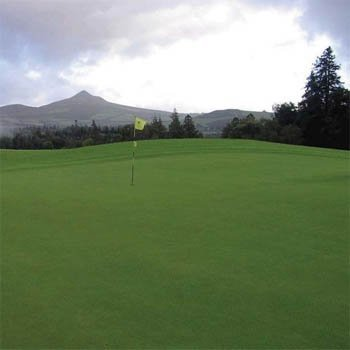 Penncross Creeping Bent Grass, 5 Pounds by Penncross (Image #1)
