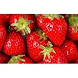 Strawberry - 1949 - Premium Grade Fragrance Oil - Supplie Concentrated - High Performance - 1 Oz (30 ml)