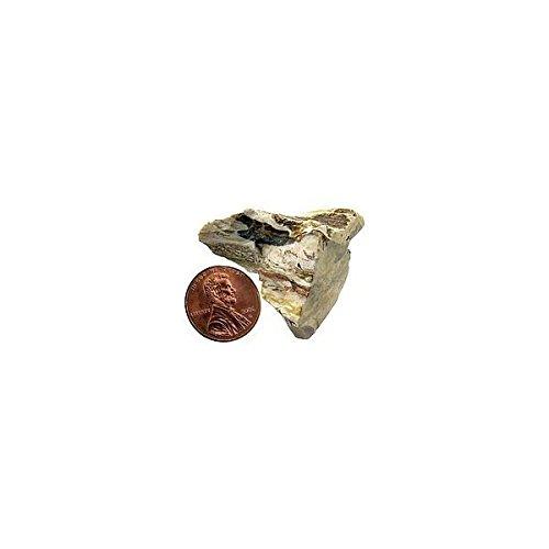 Petrified Wood - Bulk Mineral B002MV46N2