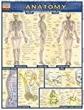 Anatomy Quick Study Guide by BarCharts