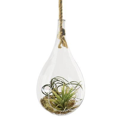 We love the rustic touch of the knotted rope in this otherwise elegant teardrop-shaped hanging terra