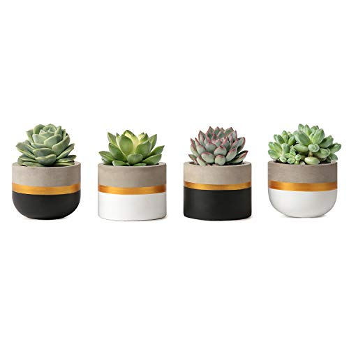 Mkono 3 Inch Mini Cement Succulent Planter Modern Concrete Cactus Plant Pots Small Clay Indoor Herb Window Box Container for Home and Office Decor Xmas Gift, Set of 4 (Plant NOT Included) (Home Gold Accessories)