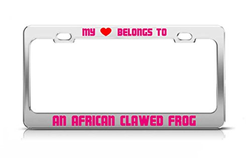MY HEART BELONGS TO AN AFRICAN CLAWED FROG Animal Safari License Plate ()