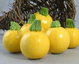 One Ball Squash 15 Seeds - GARDEN FRESH PACK!