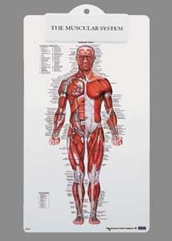 Muscle Man Plastic Clipboard-8946PCB