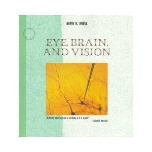 American Vision Eye Care - 9