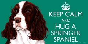 Springer Spaniel Dog Gift - 'KEEP CALM' LARGE colourful 4' x 8' MAGNET - High Quality flexible magnet for indoor or outdoor use for your Fridge, Car, Caravan or use on any flat metal surface -Water proof and UV resistant. Car-Pets Ltd