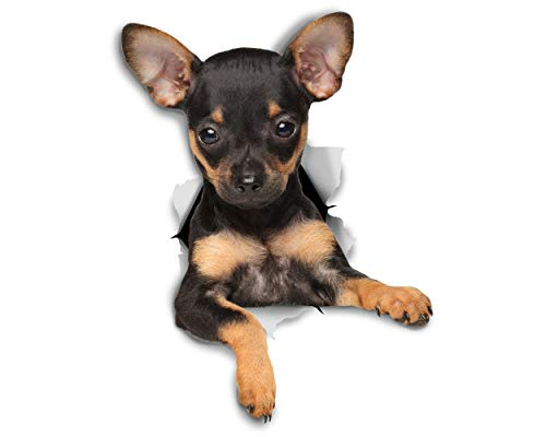 Winston & Bear 3D Dog Stickers - 2 Pack - Toy Terrier Puppy for Wall, Fridge, Toilet and More - Retail Packaged Toy Terrier Puppy Stickers