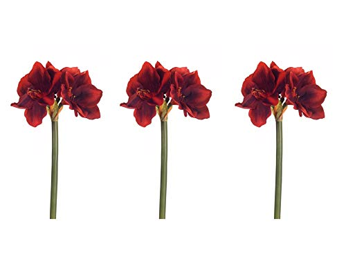 - Floral Kingdom Real Touch 30' XLarge Artificial Amaryllis Flowers for vase Arrangements, Home/Office Decor (Pack of 3) (Red)