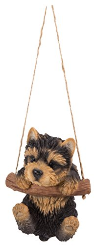 Hanging Yorkshire Terrier Puppy