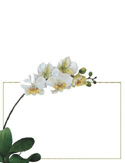 Caspari Place Cards Weddings & Parties No Placecard Holders Needed 16 Placecards Tented & Die Cut Orchids