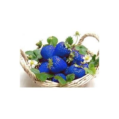Blue Strawberry Fruit Seeds Vegetable Seeds Plants Flores Bonsai Patio Lawn Garden Plant - 500 PCS : Garden & Outdoor