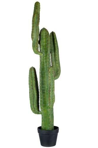 cactus vendita