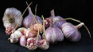 Rare and Limited-Maiskij Garlic-5 Bulbs Food Quality for Planting Organic no GMO by MW188