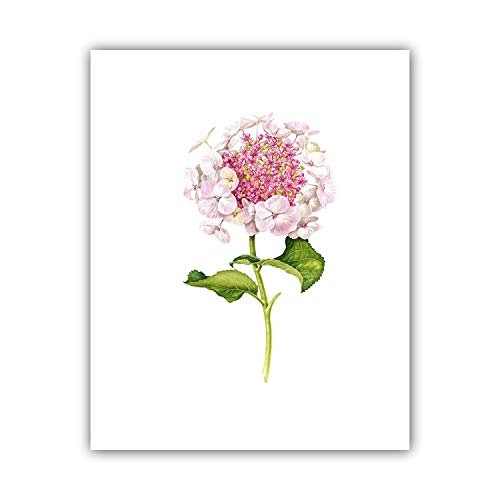 (Modern Watercolor Canvas Art Print Painting of Chinese Rose,Hydrangea Macrophylla and Rare Flower,Wall Picture for Dining Room,30x40cm)