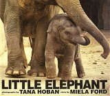 Little Elephant, Miela Ford, 0688131409