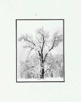 Adams Art Ansel - Ansel Adams - Oak Tree, Snowstorm SM Matted