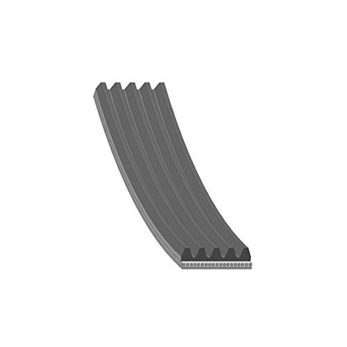 Febi-Bilstein 28864 Correa trapecial poli V