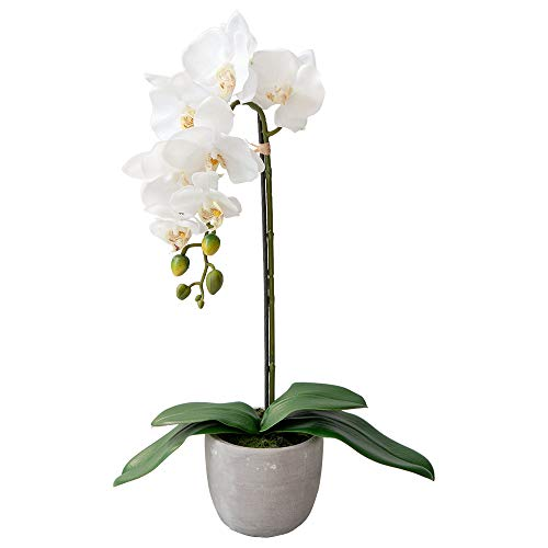 Dcors Vronneau Orchid in Ceramic Pot (White 22