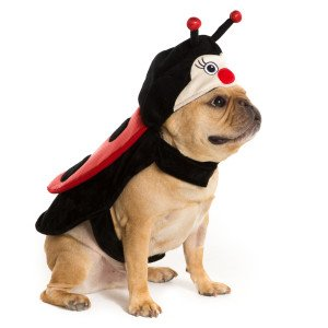 Picture Of A Ladybug Costume (Thrills & Chills Pet Halloween Lady Bug Pet Costume Small)