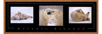 Poster Palooza Framed Nature's Kingdom-Polar Bears- 36x12 Inches - Art Print (Honey Pecan Frame)