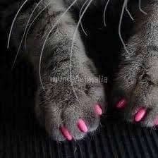 Funda de Uñas Anti Arañazos para Gato Mascota Talla M (negro): Amazon.es: Hogar