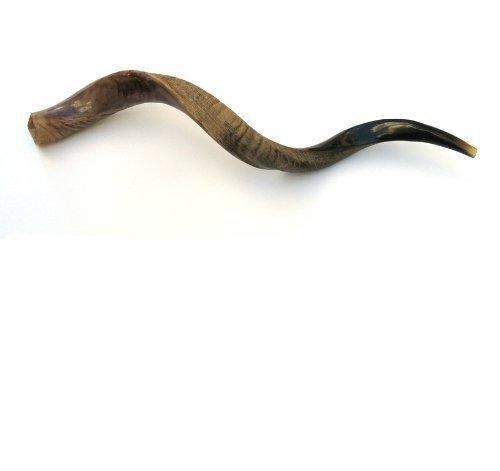 88, 9 cm große Jemenit Kudu Horn halb polierte/Natural Shoffar aus Israel Shofar