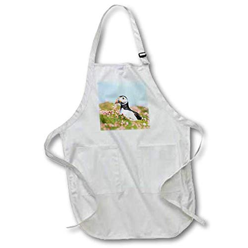 Shetland Islands With Pouch Pockets Medium 3dRose apr/_257922/_2 Apron Atlantic Puffin in a field of clover Scotland
