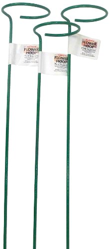 Bosmere E523 36-Inch Single Plant Stem Support with 3-Inch Hoop, 3-Pack