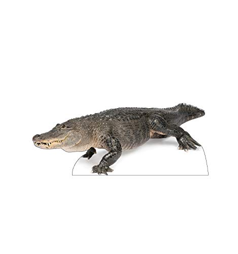 Advanced Graphics American Alligator Life Size Cardboard Cutout Standup