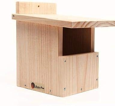 Caja nido petirrojo y lavandera: Amazon.es: Jardín