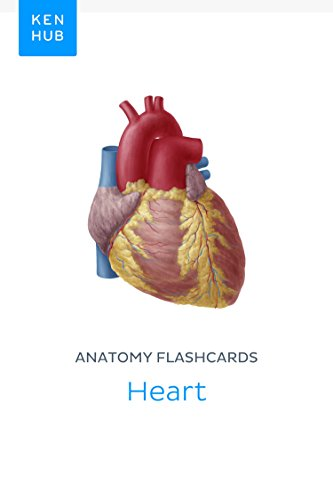 Anatomy Flashcards Heart Learn All Organs Arteries Veins And