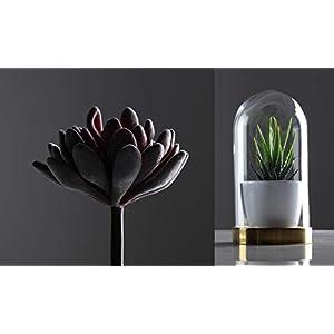 Convenient Creations Artificial Succulent Plants 14 pcs Faux Succulents, Fake Plants for Decoration, Shelf Decor, Wreath or Terrarium - Realistic Fake Succulents, Mini Air and Aloe Plant and More 6