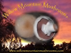 White Button Mushroom Growing Kit ~ Makes it Easy to Grow Your Fresh Shrooms! by Willow Mountain Mushrooms (Image #8)