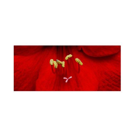 - Red Amaryllis by Kurt Shaffer, 10 by 24-Inch Canvas Wall Art