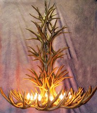 Reproduction Antler Mule Deer Tall Spruce Chandelier Light XXLarge